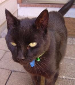My cat, Mikki